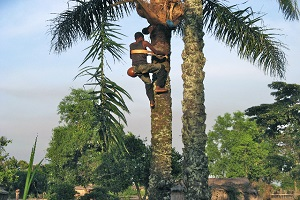 4 Reasons to Drink Palm Wine From Igboland