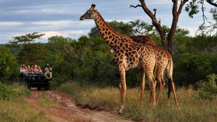 Top 5 African Safari Destinations For Unforgetable Getaway