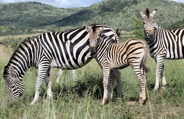 South Africa Emerges 2014 World's Leading Safari Destination